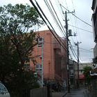 中原区 電線に掛かってしまった桜の枝おろし