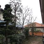 川崎市 個人宅 お庭のお手入れ
